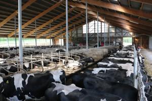 Milchviehstall (Quelle: LVN NRW)