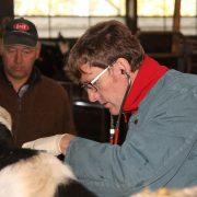Tierarzt Dr. Christoph Geuchen und Landwirt Michael Mölder bei der Gesundheitskontrolle im Stall